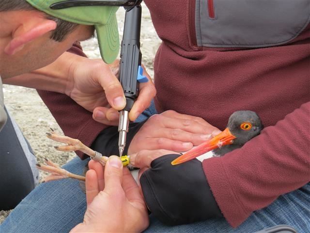 Audubon CT Banding Program (Small)
