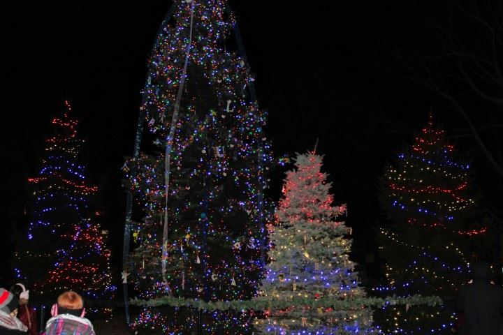 Christmas Tree Lighting 2019 101 II (Small)