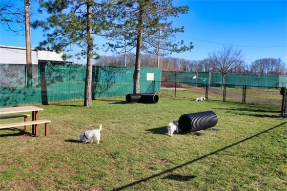 Dog park area for small dogs