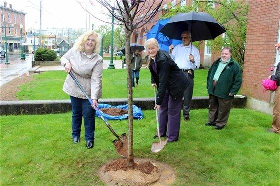 Tree planting at City Hall marks Arbor Day celebration