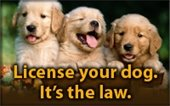 Dog license renewals due June 30