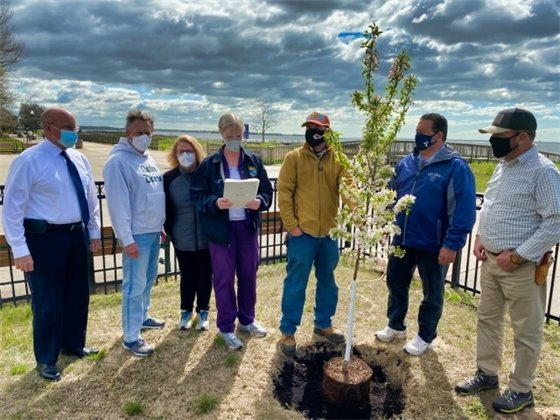 Tree plantings mark Arbor Day in West Haven