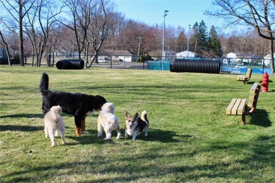 Dog park area for large dogs
