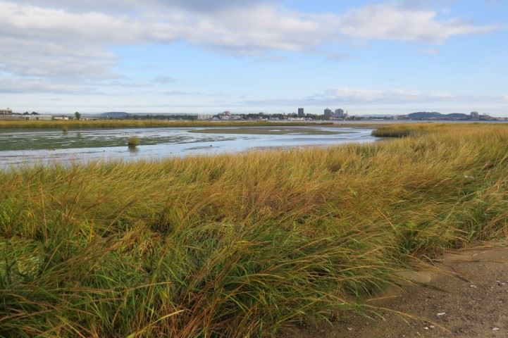 Sandy Point Audubon (Small)